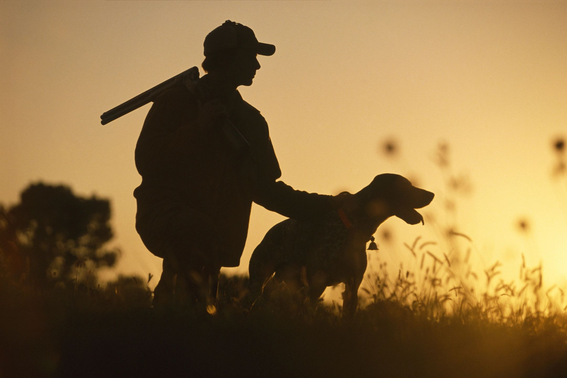 PHEASANT HUNTING TIPS TO CROW ABOUT
