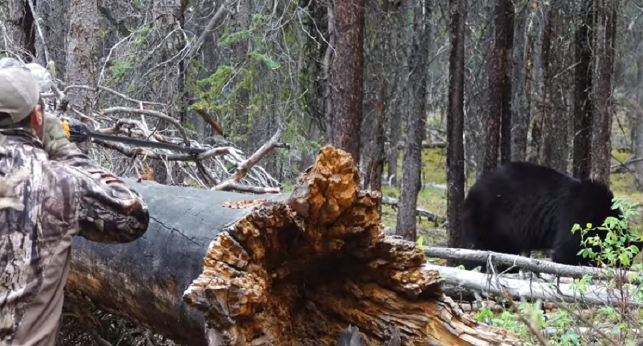 HUNTING BEAR WITH A BLOWGUN? YEP IT'S BEEN DONE (VIDEO)