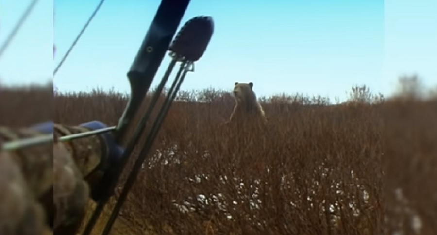 GRIZZLY BEAR RECURVE BOW HUNT THAT HAS TO BE WITNESSED (VIDEO)