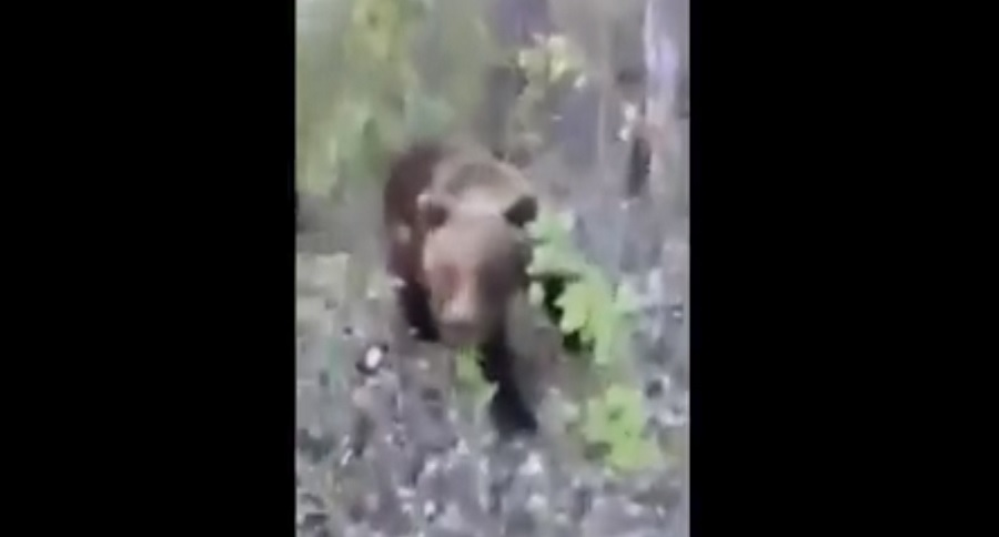 DARWIN AWARD OF THE YEAR: IDIOT VS. BEAR