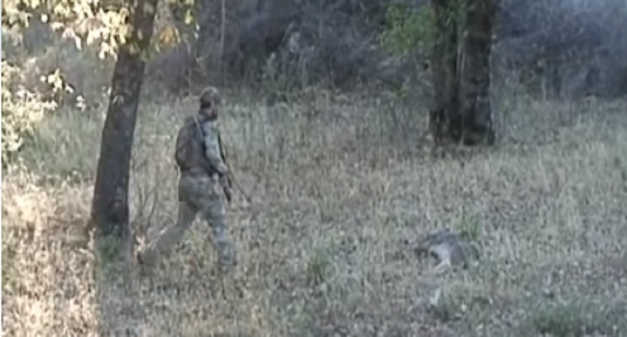 DEER POACHER SHOOTS ACROSS PROPERTY LINES: WHAT WOULD YOU DO?