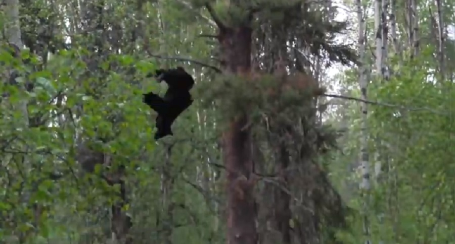 AGGRESSIVE BEAR DROPS MOST EPICALLY BY WELL PLACED ARROW